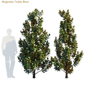 Magnolia Teddy Bear