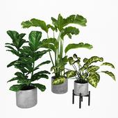 Набор растений 2