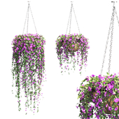 Petunia in hanging pots. 2 models