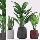 Plants 133