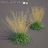 Щучка дернистая Луговик | Deschampsia cespitosa goldtau
