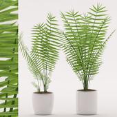 Plants 138