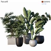 Plant set # 6