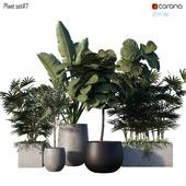 Plant set # 7