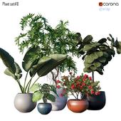 Plant set # 8