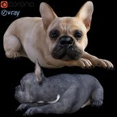 Dog_Bull