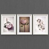 Flowers of Protea