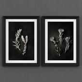 Protea art (black)