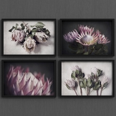 Protea flower art