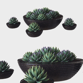succulent glass pot