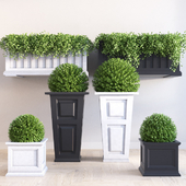 Mayne planter set
