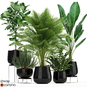 Plants collection 180