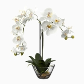 Phalaenopsis Silk White Orchid in Glass Vase