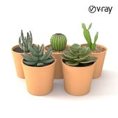 Mini cactus collection 01