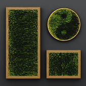 Yin and Yang stabilized moss