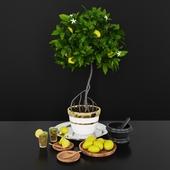 Decorative set_Lemon tree Model