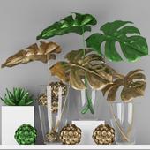 Decorative plants Indoor