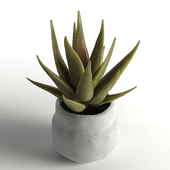 Faux aloe plant in pot