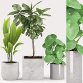 Plants 155