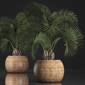Коллекция растений 344.