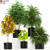 Plants collection 183