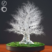 JC Winter Bonsai