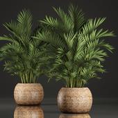 Коллекция растений 346.