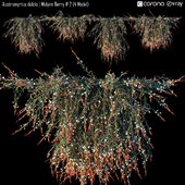 Austromyrtus dulcis | Midyim Berry # 2 (4 Model)