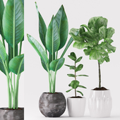 Plants 156