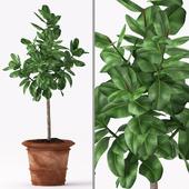 Plants 157