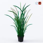 Feika_80433938_room plant