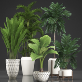 Коллекция растений 349.