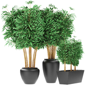 Bamboo Plant Exotic Plant Decoration Home
