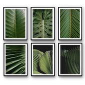 Tropical Leaves| set 31