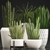 Коллекция растений 350.