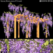 Fabaceae | Wisteria sinensis # 2 (4 model)