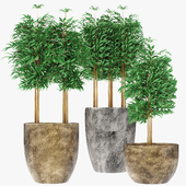 Three Bamboo Plants Design