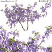 Fabaceae | Wisteria sinensis # 3