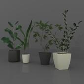 Indoor_Plant: Sina Model