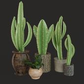Plant & pot: Matin Model 02