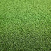 Arch_grass 02