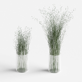 Grass in vases