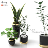 plant collection_Set 01