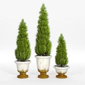 Tuscan planters