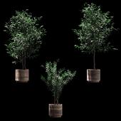 Растения в деревянных горшках. 3 модели
