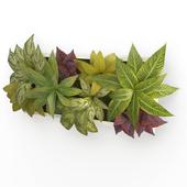 Plants Frame 60 x 30 cms