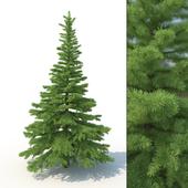 3d модель дерева ель