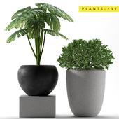 Plants 237