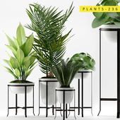 Plants 236