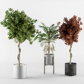 outdoor-plants Broadleaf & Palm